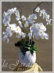 Silk - Orchid Plant Arrangement