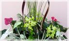 Planters & Live Plant Arrangements