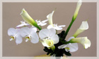 White Upscale Flower Arrangements