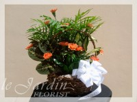 Sympathy Planter & Fresh Cut Carnations Flower Arrangement | Le Jardin Florist