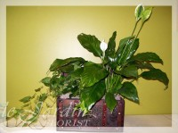 French Château Planter - Live Plants Flower Arrangement | Le Jardin Florist