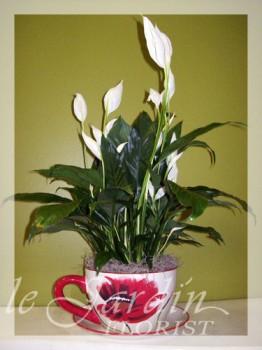 Chamonix Planter - Live Plants Flower Arrangement | Le Jardin Florist