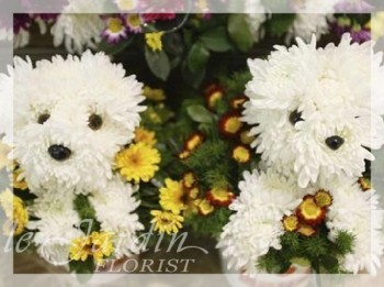 Tooxy & Tocksy the Terriers - Flower Arrangements for Kids   Le Jardin Florist