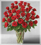 Three Dozen Premium Long Stem Roses