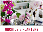 Orchids and Live Plants