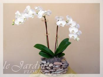 Double stem imperial orchids arrangement in le jardin for Le jardin quoi planter