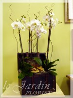 Five Stems Orchids Collection by Le Jardin Florist