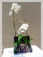 Double Stem Orchids Arrangement in Le Jardin Treasure Chest Container