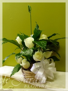 Peace Lily Planter with Fresh Cut Roses | Floral Arrangements by Le Jardin Florist