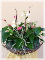 Orchidia II - Orchids and Live Plants | Le Jardin Florist Signature Arrangement