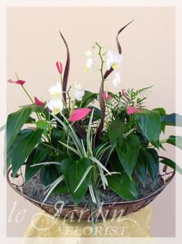 Orchidia II - Orchids and Live Plants | Le Jardin Florist Signature Arrangement