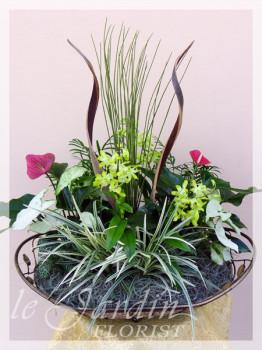 Orchidia - Orchids and Live Plants | Le Jardin Florist Signature Arrangement