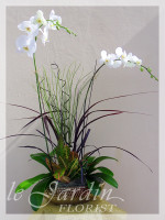 Orchids and Live Plants | Le Jardin Florist Signature Arrangement