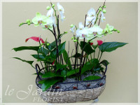 Premium Orchid Planter - Orchids and Live Plants by Le Jardin Florist