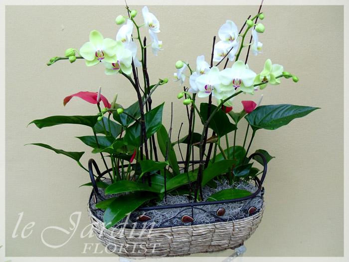 Premium orchid planter orchids and live plants by le for Le jardin quoi planter